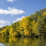 Сочинения «Жизнь леса и судьбы людей»